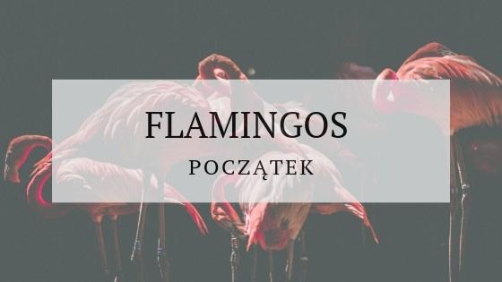 Flamingos początek